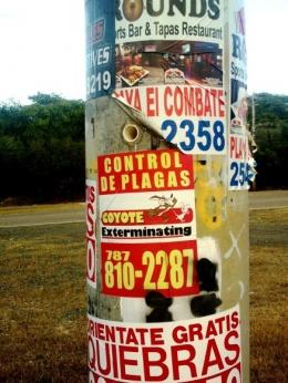 Cabo Rojo, Puerto Rico - 2014 (Foto: Rudolf Hübl)